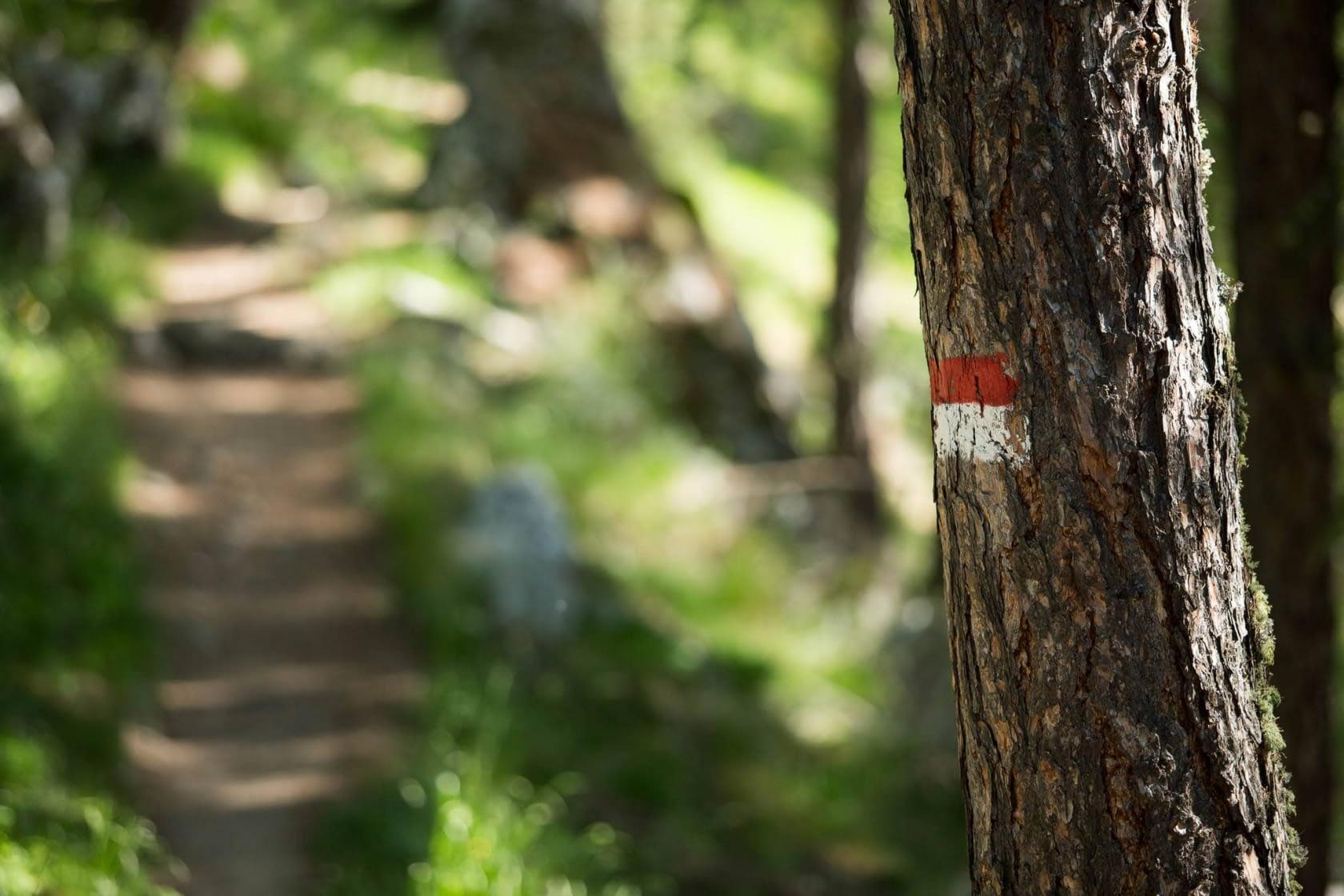 Wandern am Kalterer Höhenweg